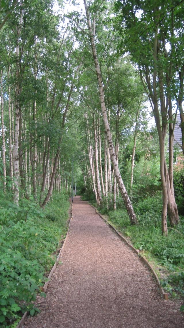 silver birch path